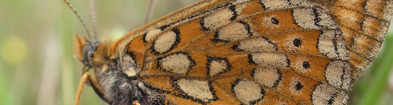 Prevent loss of biodiversity